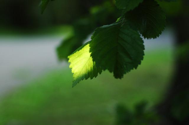 leaf-1545383-639x425