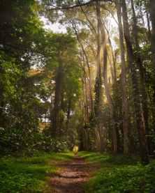Photo by Darwis Alwan on Pexels.com